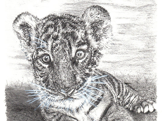 Baby Tiger Cub Original Mounted Drawing