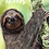 Thumbnail: Sloth Blank Greetings Late Card - Supports Conservation Charity