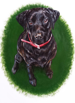 Black Labrador Puppy Dog Pet Portrait