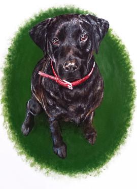 Black Labrador Puppy Dog Pet Portrait