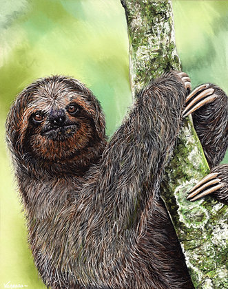"ORIGINAL Hand Signed Bradypus Sloth Pastel Drawing ""Content in the Canopy"""
