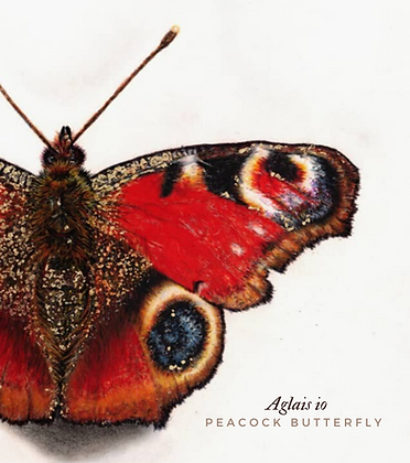 "ORIGINAL Hand Signed Peacock Butterfly Pastel Drawing ""Aglais io"""