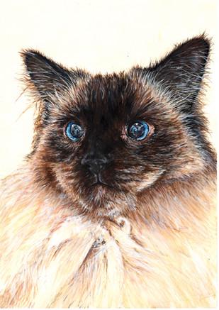 Persian Cat Pet Portrait Painting