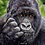 Thumbnail: Gorilla Blank Greetings Appreciate You Card - Supports Conservation Charity