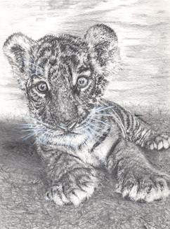 """FLUKE"" Bengal Tiger Cub"