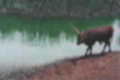 Origina Paintings by Wildlife Artist Vanessa Grundy