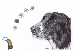 Dog Pet Portrait Collie