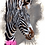 Thumbnail: Zebra Blank Greetings Good News Card - Supports Conservation Charity