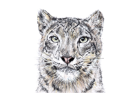 Original Snow Leopard Drawing