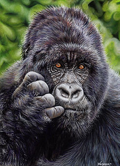 Gorilla Resized 1.jpg
