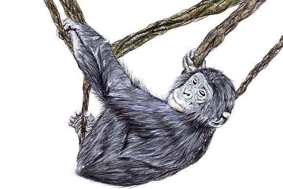 Original Baby Bonobo Chimpanzee Drawing