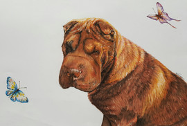 Dog Pet Portrait Shar-pei