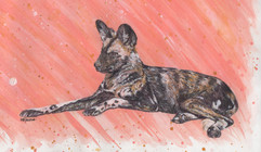 Painted Dog Painting