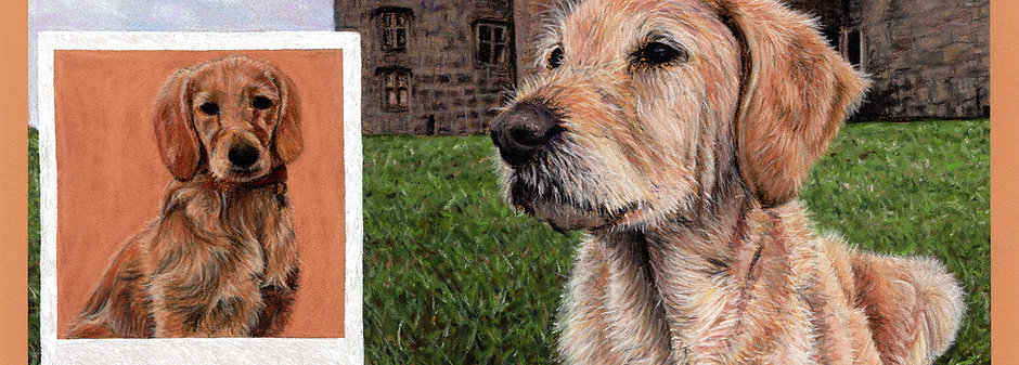 Pet Portraits - Commission an Original Painting or Drawing of your Pet