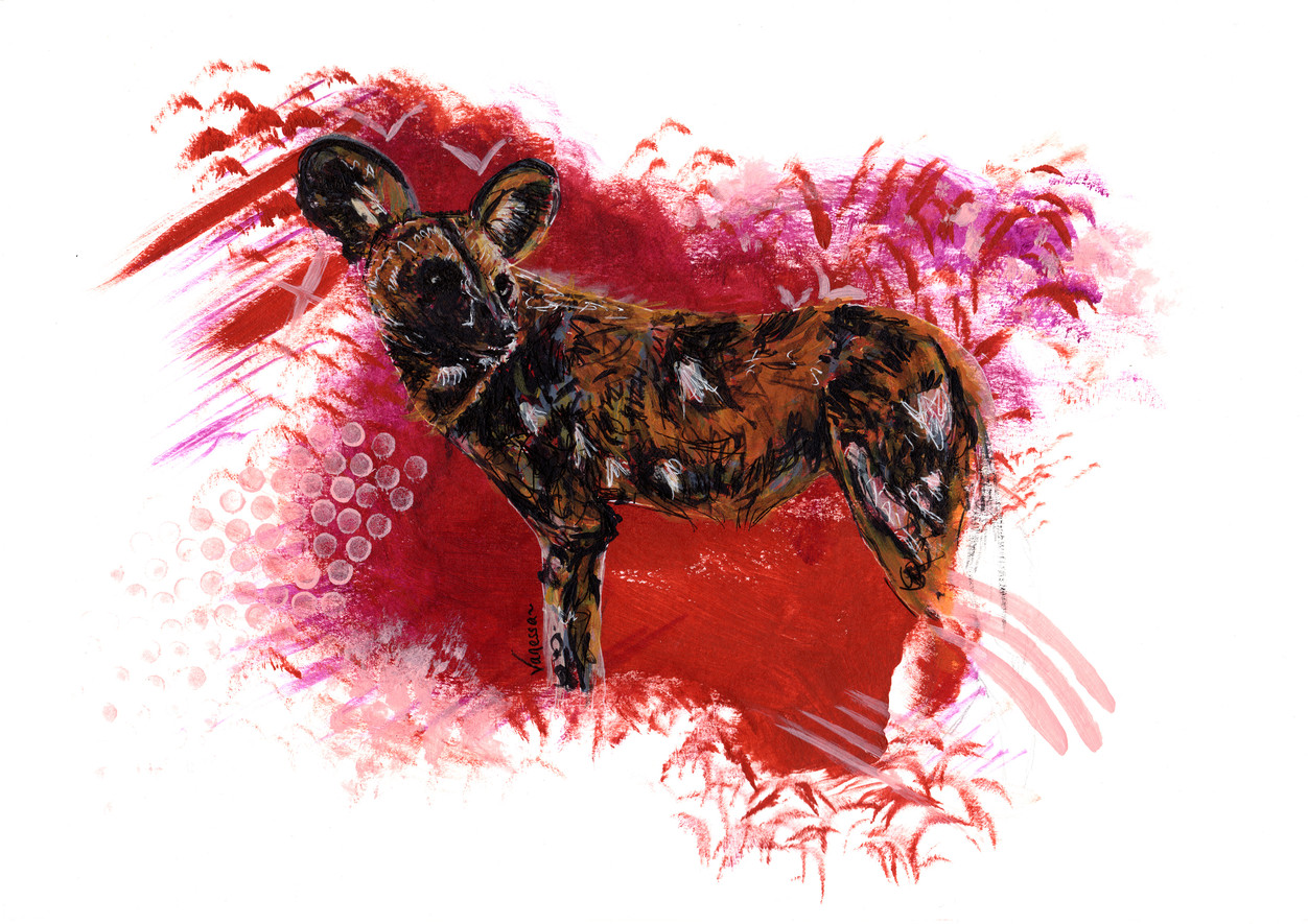 Painted African Wild Dog