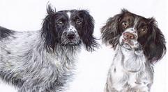 Dogs Pet Portrait