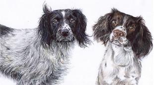 Dogs Pet Portrait Paintings