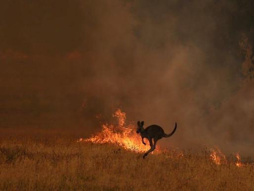 100% profit of website sales going to Australian bushfire wildlife rescue