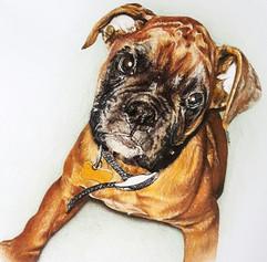 Boxer Puppy Dog Pet Portrait