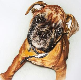 Dog Pet Portrait Boxer