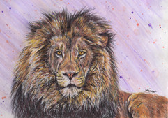 Male Lion Painting