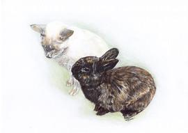 Cat and Rabbit Pet Portrait