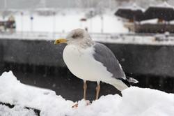 BIRDS 005