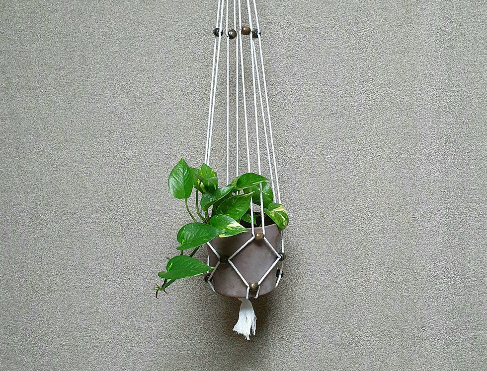 Kasvitar Amppeli  -valkoinen/ mustanruskea