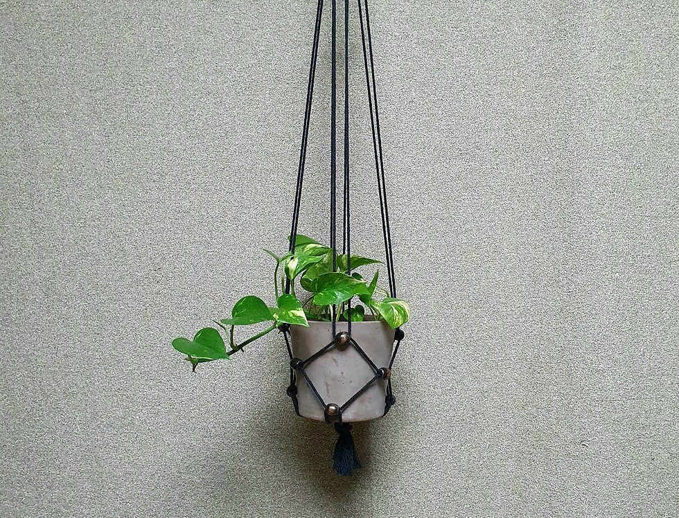 Kasvitar Amppeli -musta/mustanruskea