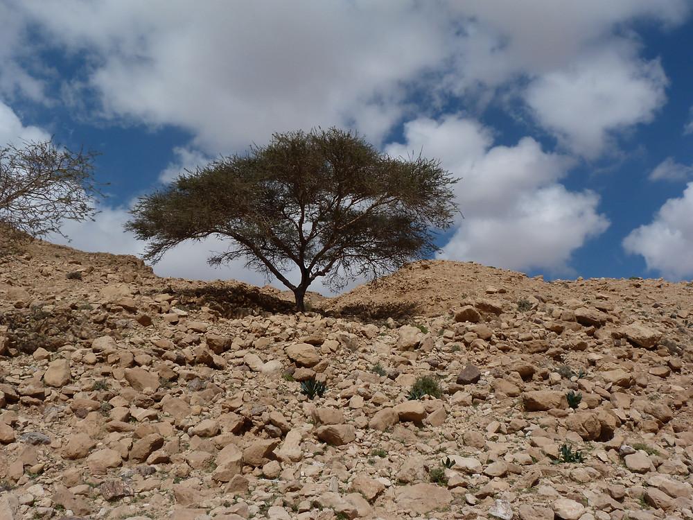 PikiWiki_Israel_15993_Judean_Desert.JPG