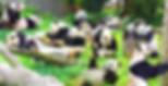 Panda-Zoo-Beijing.png