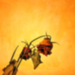 Dried rose in grunge style, Concept of S