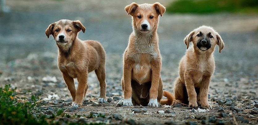 dogs-984015_1920_edited.jpg