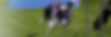 4-Hunde_spagettitag_2014_08_31_9423 (150