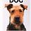 Thumbnail: Dog Magazine