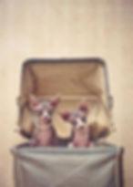 HAIRLESS CATS IN BAG.jpg