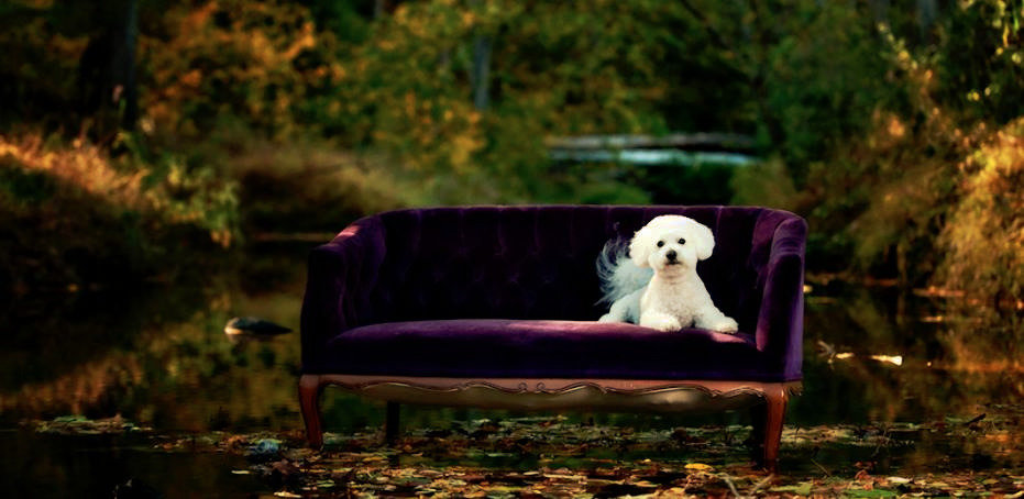 WHITE TERRIER ON CHAISE