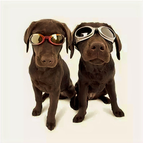 DOGGLES - Gold