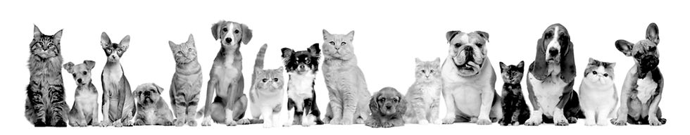 pups and kits in b and w.jpg