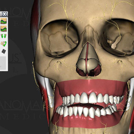TMJ and Occlusion Made Simple
