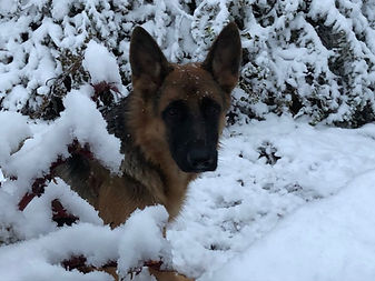 winter pup.jpg