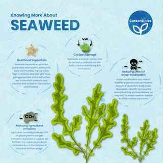 Knowing More About the Seaweed