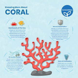 Knowing More About Corals
