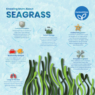 Knowing More About the Seagrass