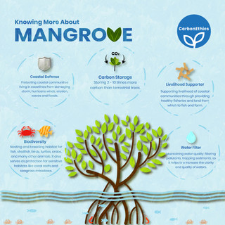 Knowing More About the Mangrove Tree