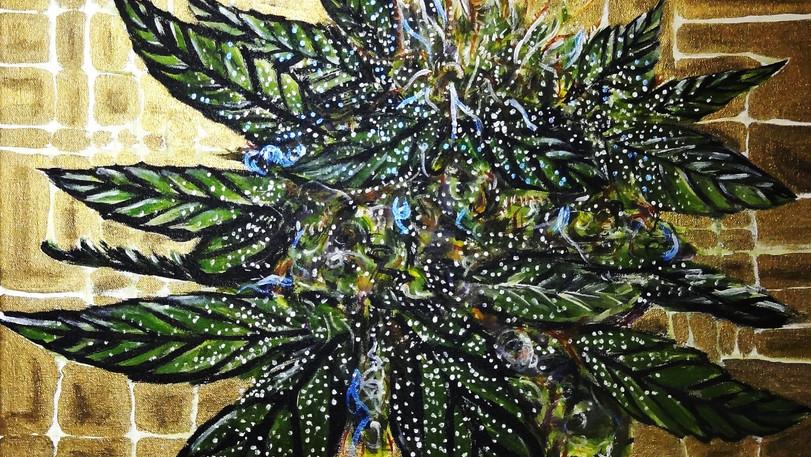 Cannabis Hybrid Finished. Acrylic on Canvas.