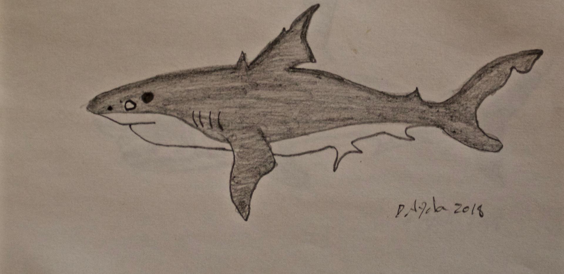 Tiburon 3. Pencil on Paper.