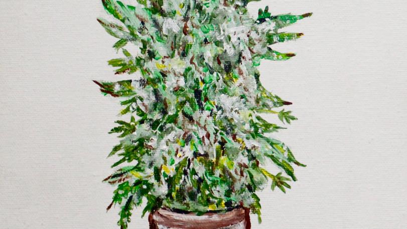 Cannabis Sativa. Acrylic on Wood.