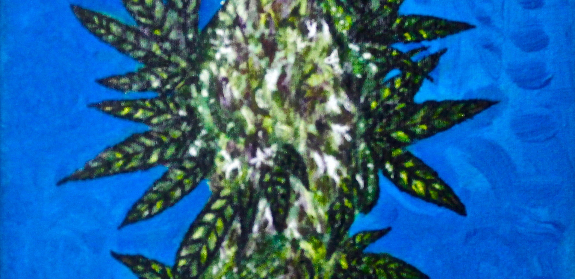 Purple Haze Cannabis.