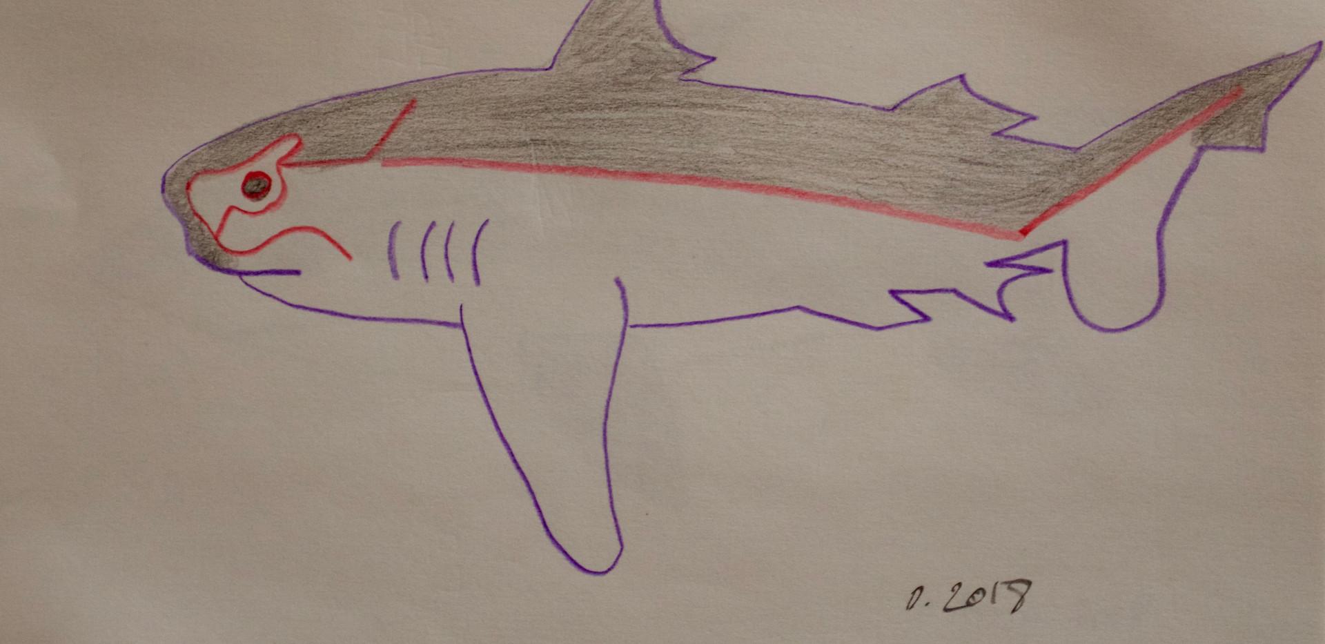 Tiburon 2. Pencil on Paper.